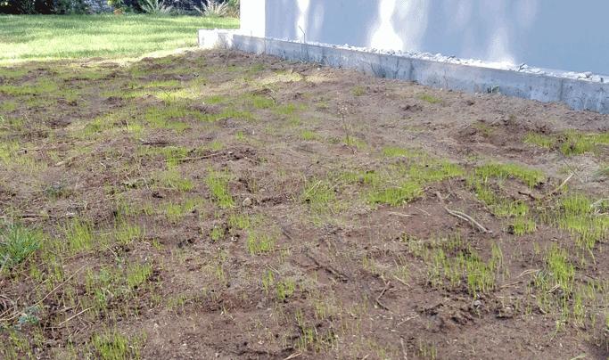 Fabelhaft Rasen säen: Kurze Anleitung @SS_97