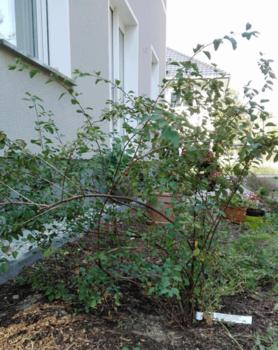 Robuste Pflanzen Für Trockene Standorte Meine Auswahl Erfahrungen