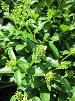 pflanzen für trockene standorte
