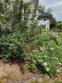 pflegeleichter garten pflanzen
