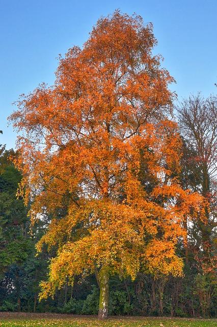 bäume für trockene standorte