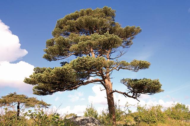 bäume für trockene sandige böden
