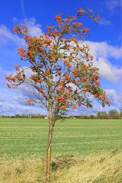 bäume für sonnige standorte
