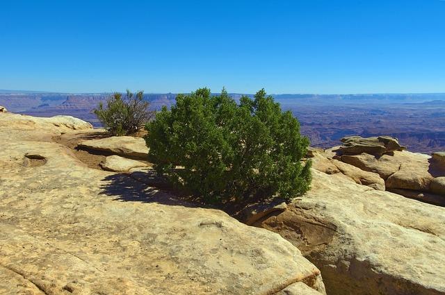 trockenresistente bäume