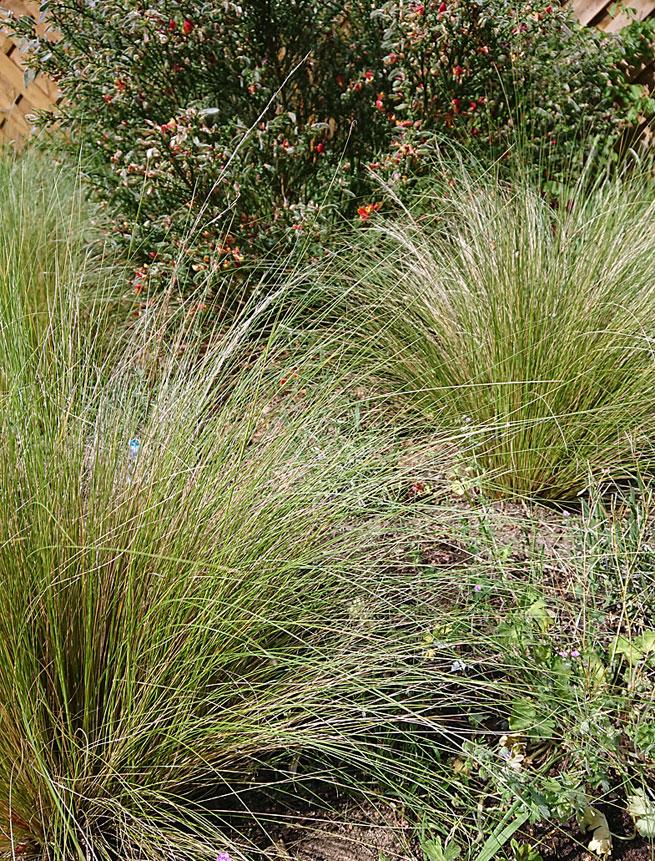 gräser für trockene und sonnige standorte