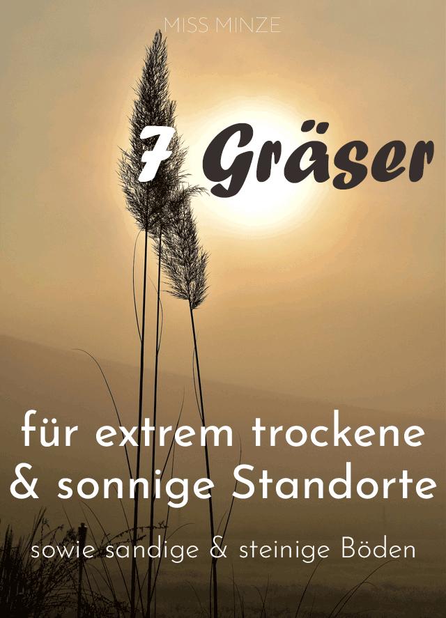 Gräser für trockene & sonnige Standorte